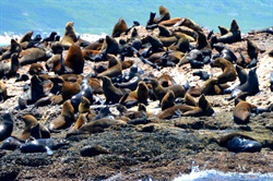 Mossel Bay et Otaries Land